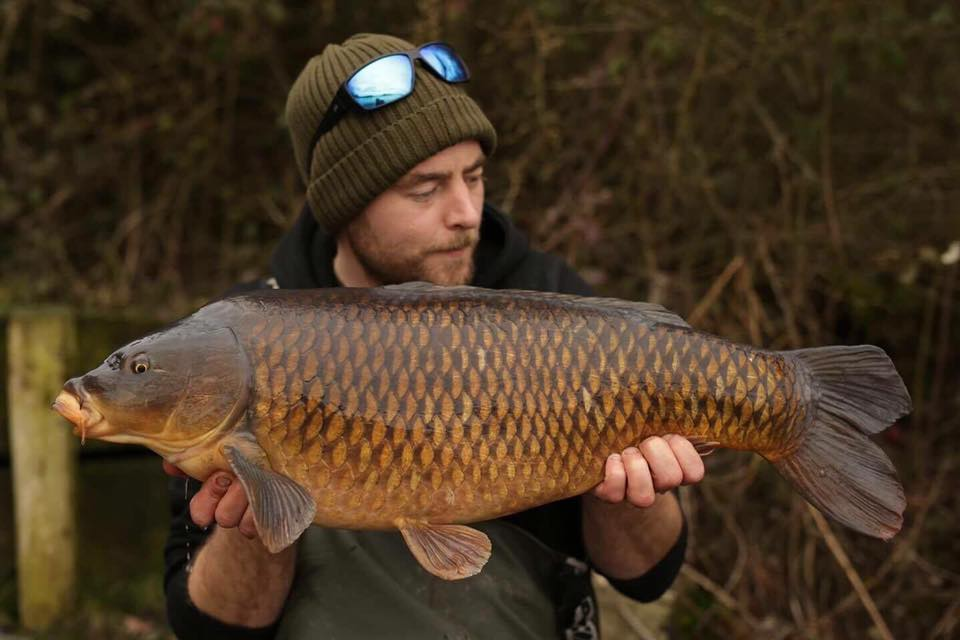 Big Common Carp